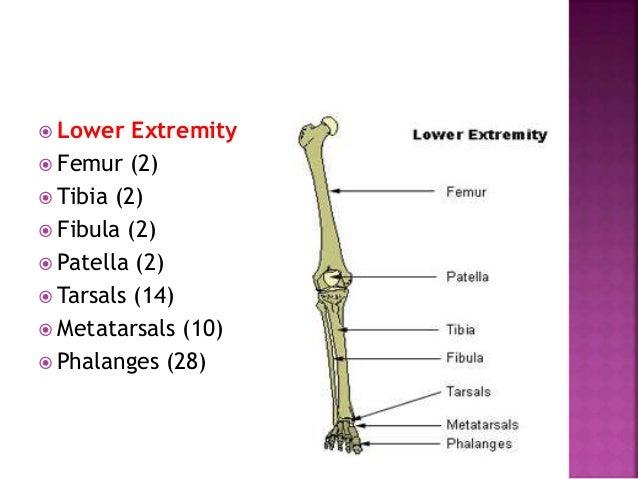 Structural classification Functional classification Regional classification According to no. of articulating bones Fibrous...