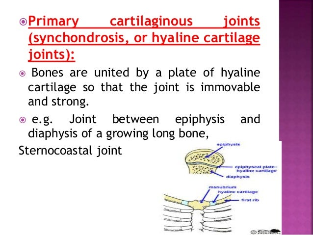  PLANE SYNOVIAL JOINTS:  Articular surfaces are more or less flat (plane)  Permit gliding movements (translations) in v...