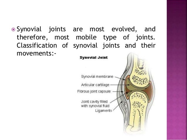  BALL AND SOCKET(SPHEROIDAL) JOINTS:  Articular surfaces include a globular head (male surface) fitting into a cup shape...