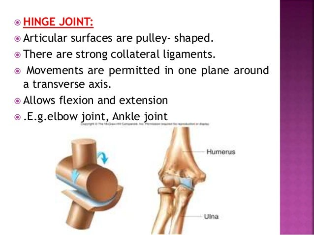  ELLIPSOID JOINTS:  Articular surfaces include an oval, convex, male surface fitting into an elliptical, concave female ...