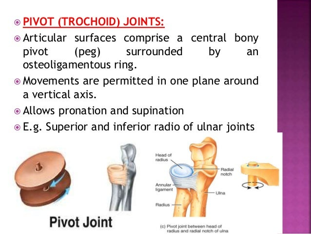  SADDLE JOINTS:  Articular surfaces are reciprocally concave.  Movements are similar to those permitted by and ellipsoi...