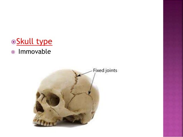  Only two bones takes part in formation of joints, e.g. interphalangeal joints.