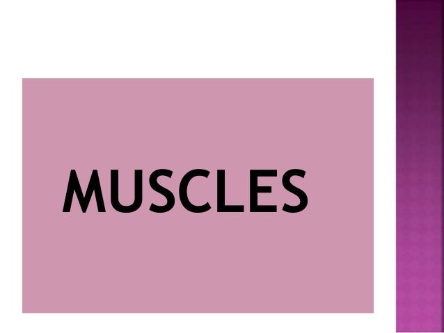  CHARACTERISTICS:-  Attached by tendons to bones.  Multinucleated  Striated- have stripes, banding.  Voluntary moveme...