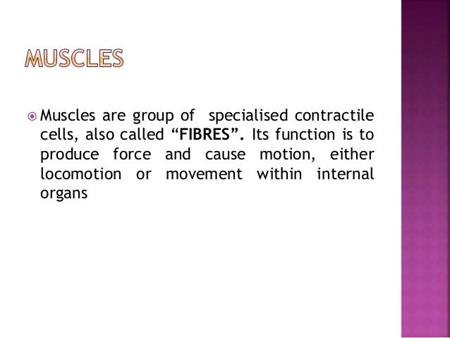  FUNCTION:  Movement of the skeleton eg. movement of limbs, fingers, toes, neck, etc.  Movement of tissues of facial ex...