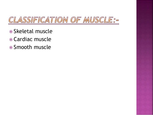  LOCATION:- Found mainly in the walls of hollow organs, vessels, respiratory pathway.