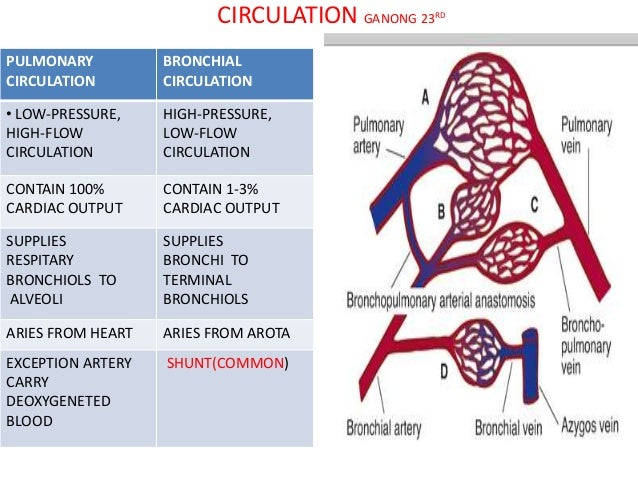 Abhishek respiratory ANATOMY & PHYSIOLOGY , and ACUTE RESPIRATORY FAI…