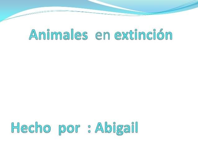 Animales en extinción Una especie se considera en peligro de extinción, sea vegetal  o animal, cuando se encuentra en pel...