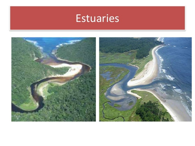 adaptive features of plants and animals in estuarine habitat Every plant or animal lives in a habitat a habitat is another name for their local environment plants and animals often have to adapt, or change in order to survive.