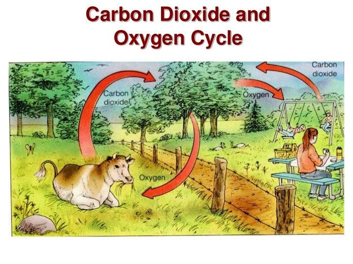 Abiotic cycles