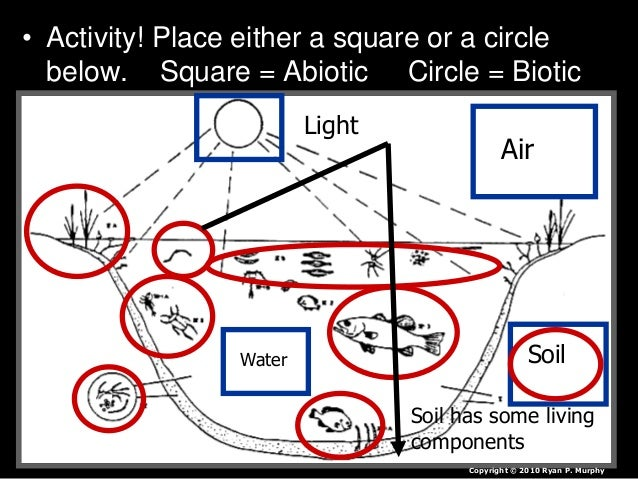 • Activity! Place either a square or a circle below. Square = Abiotic Circle = Biotic Air Water Light Soil Soil has some l...