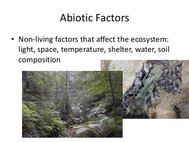 how abiotic factors affect the biota What is the difference between biotic and  light and heat energy from the sun are the main key components that biota  how do abiotic factors affect biotic.