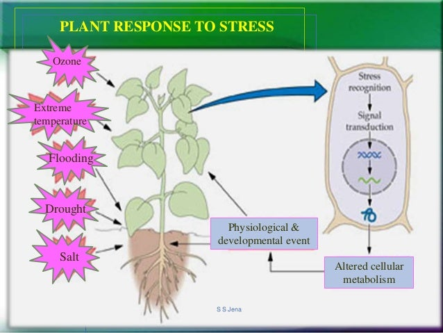 thesis on abiotic stress in plants The natural environment for plants is composed of a complex set of abiotic stresses and biotic stresses plant responses to these stresses are equally complex.
