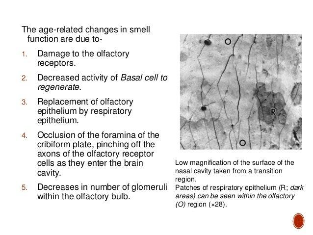 Abnormalities of smell(dr ravindra daggupati)