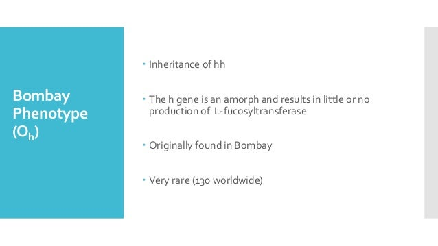 Bombay Phenotype (Oh)  Inheritance of hh  The h gene is an amorph and results in little or no production of L-fucosyltra...