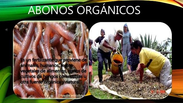 ABONOS ORGÁNICOS  Es un fertilizante que proviene de  animales, humanos, restos  vegetales de alimentos, restos de  cultiv...