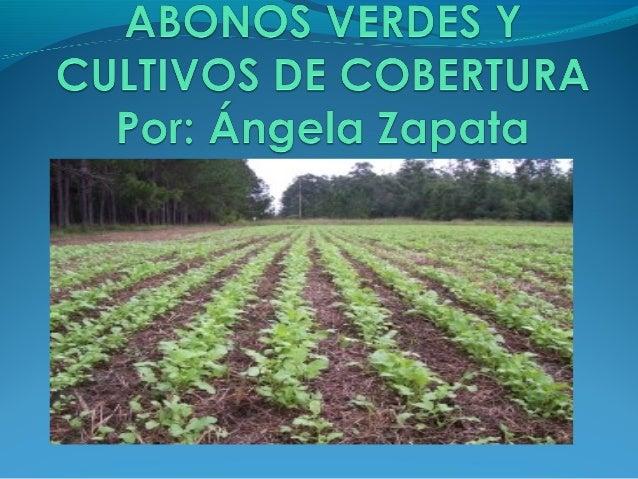 Acción de abonar en verde por medio de la utilización de cultivos de vegetación rápida, se reproducen en el mismo lugar do...