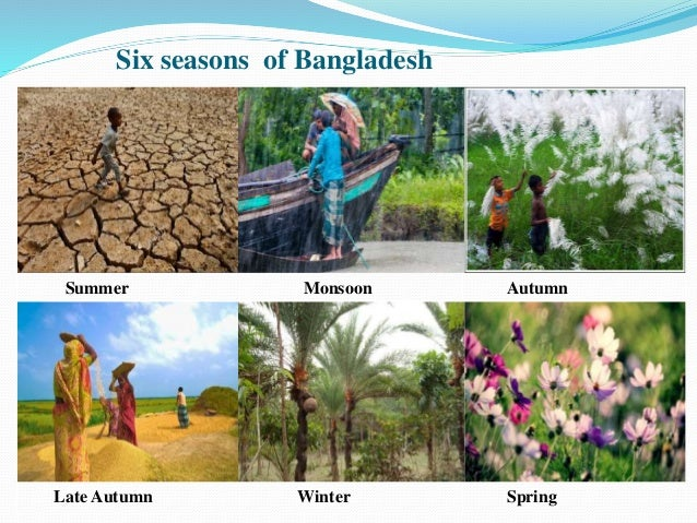 six season of bangladesh essay Introduction: our bangladesh is a beautiful countryit is a land of forest and trees,hills and vales,rivers,marshes and canals,wide open meadwodsit has got a moderate climet-neither too hot nor so coldso this land is happy abode of different kinds of birdsbirds have increased the beautiful of our countrywe sleep at night and rise early in the morning hearing the sweet songs of different birds.