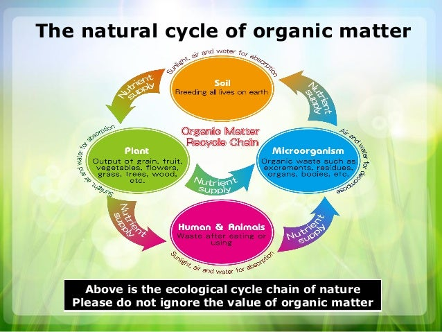 Organic Foods Food Matter