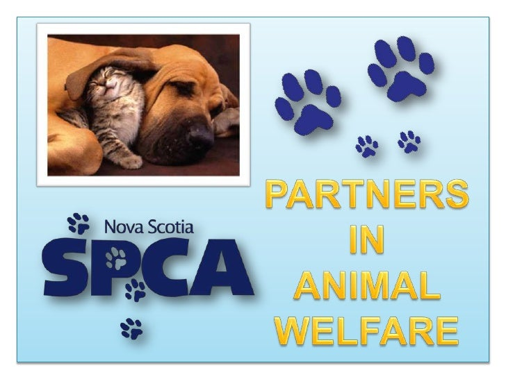PARTNERS IN<br />ANIMAL WELFARE<br />