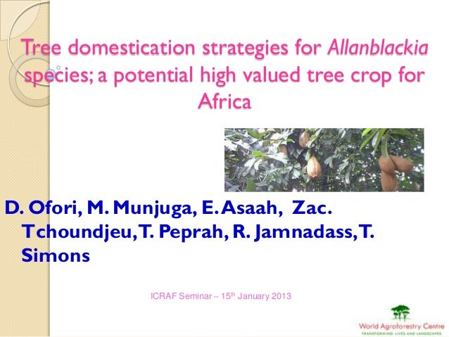 Tree domestication strategies for Allanblackia species; a potential high valued tree crop for                      AfricaD...