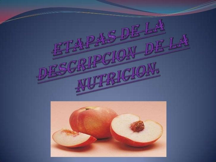 Etapas de la descripcion  de la nutricion.<br />