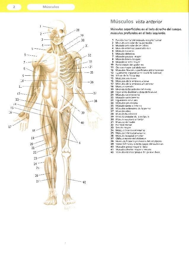 Dorable Anatomía Y Palastanga Movimiento Humano Elaboración ...