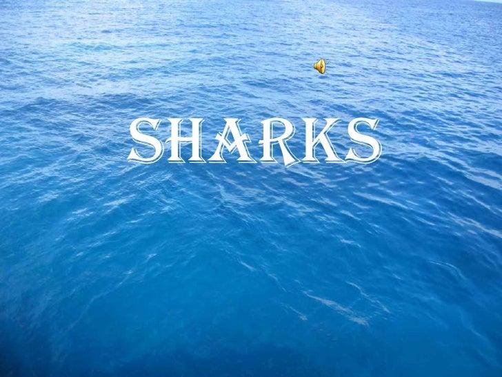Sharks<br />Sharks<br />