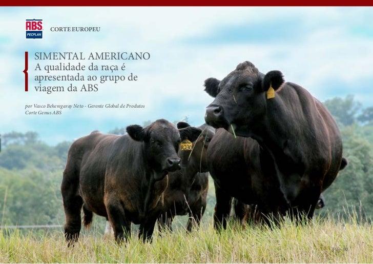 CORTE EUROPEU    SIMENTAL AMERICANO    A qualidade da raça é    apresentada ao grupo de    viagem da ABSpor Vasco Beherega...