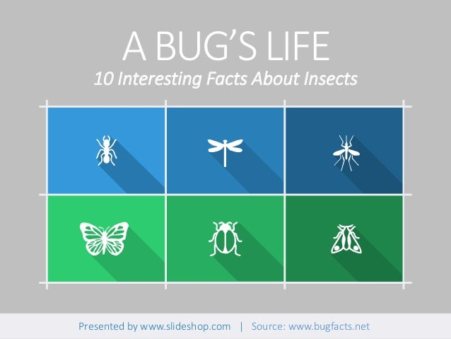 ABUG'SLIFE Presented by www.slideshop.com | Source: www.bugfacts.net 10 Interesting Facts About Insects