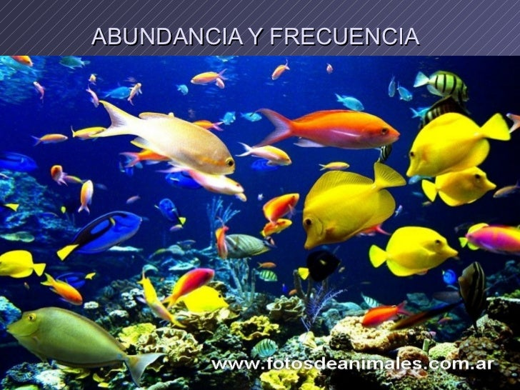 ABUNDANCIA Y FRECUENCIA