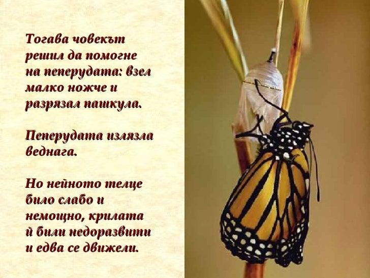 Тогава човекът решил да помогне на пеперудата: взел малко ножче и разрязал пашкула.   Пеперудата излязла веднага.  Но нейн...
