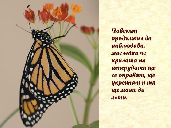 Човекът продължил да наблюдава, мислейки че крилата на пеперудата ще се оправят, ще укрепнат и тя ще може да лети.