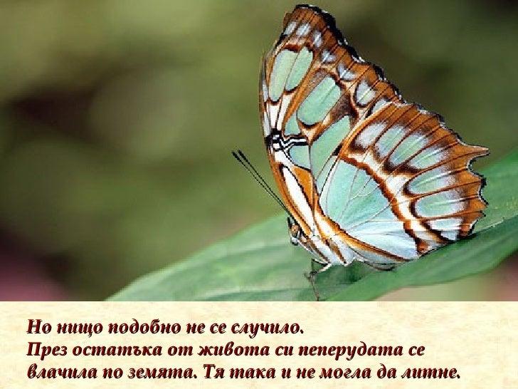 Но нищо подобно не се случило. През остатъка от живота си пеперудата се влачила по земята. Тя така и не могла да литне.