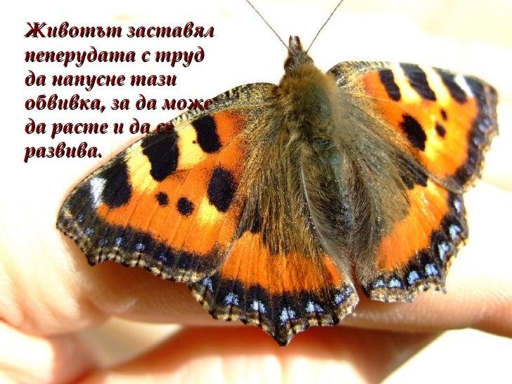 <ul><li>Животът заставял пеперудата с труд да напусне тази обвивка, за да може да расте и да се развива.   </li></ul>