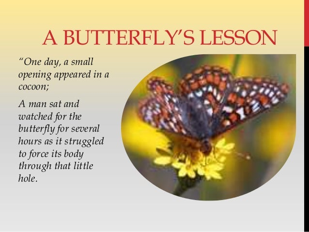 """One day, a small opening appeared in a cocoon; A man sat and watched for the butterfly for several hours as it struggled ..."