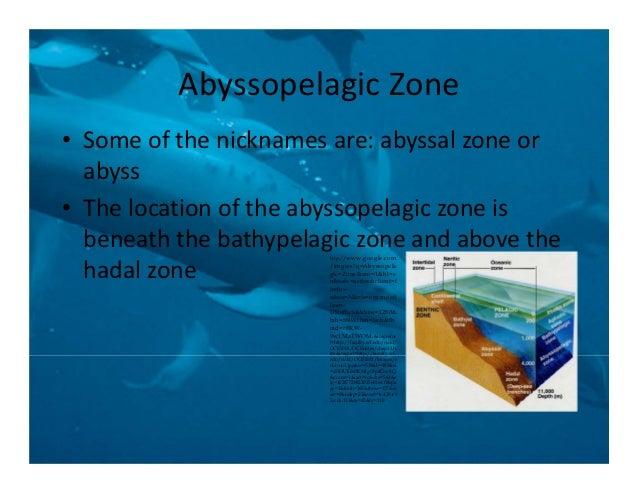 abyssal zone organisms
