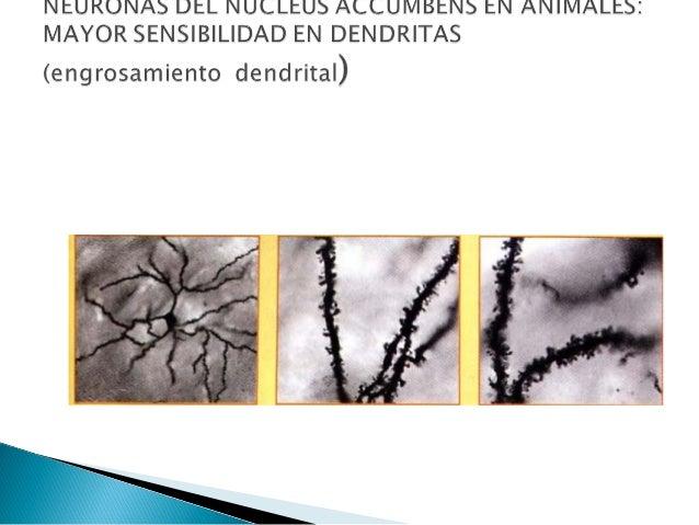 Academia de ciencias de la republica dominicana   terminado  para entrega final