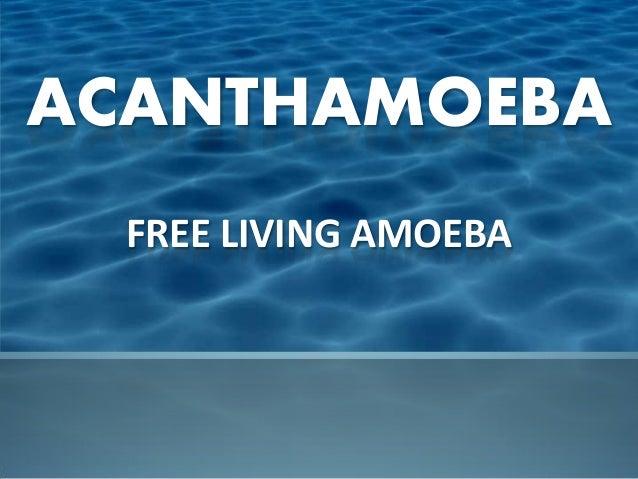 ACANTHAMOEBA  FREE LIVING AMOEBA