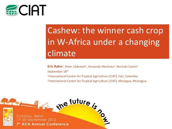 Cashew: the winner cash cropin W-Africa under a changingclimateEric Rahn1, Peter Läderach2, Armando Martinez2, Narioski Ca...