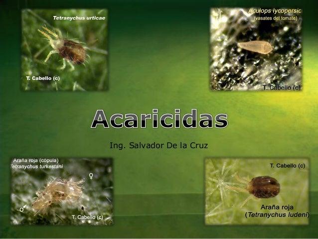 Ing. Salvador De la Cruz