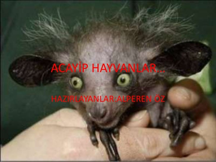 ACAYİP HAYVANLAR…<br />HAZIRLAYANLAR:ALPEREN ÖZ<br />