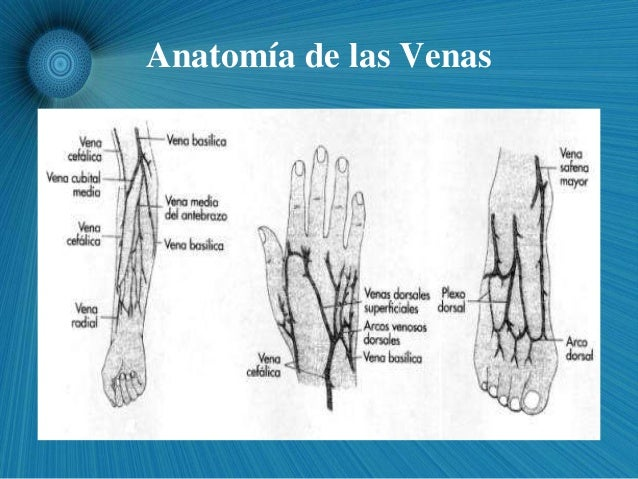 El esquema de la vena profunda en los pies