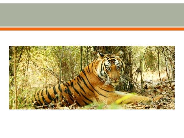  Nature Safari India Pvt. Ltd.  51 B-3 Sector-11 Rohini  New Delhi-110085(lndia)  Tel: + 91-11-2757 0446, 2757 0581  ...