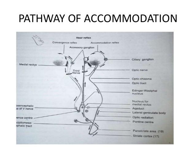 DIMINISHED ACCOMMODATION PHYSIOLOGICAL PHARMACOLOGICAL PATHOLOGICAL
