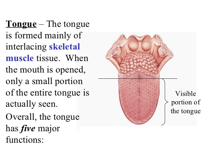 Overall, the tongue has  five  major functions: Tongue  – The tongue is formed mainly of interlacing  skeletal muscle  tis...