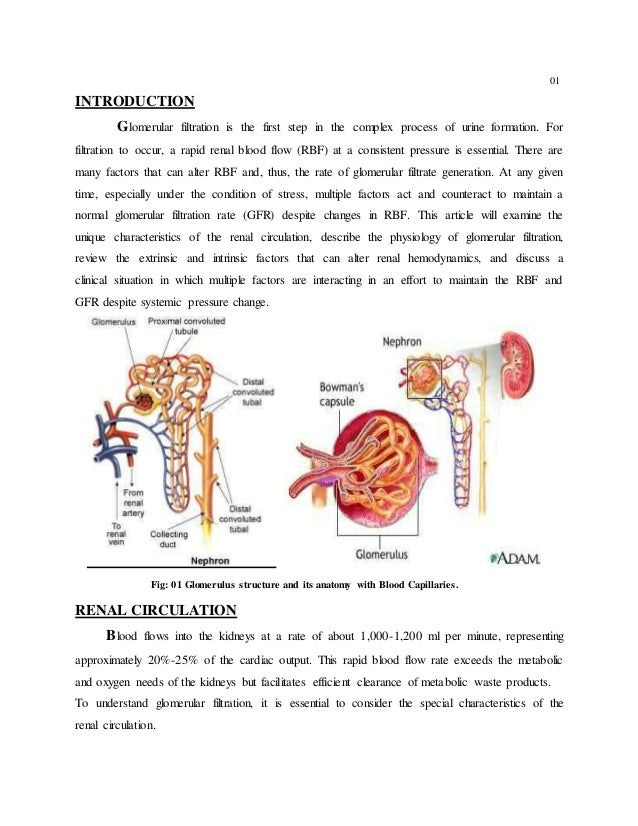 Accurate Assessment Of Kidney Function In The Critically