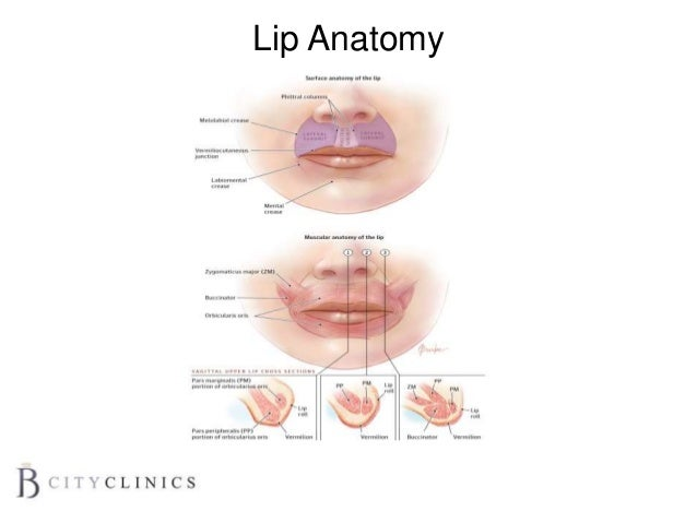 Ace17 lips
