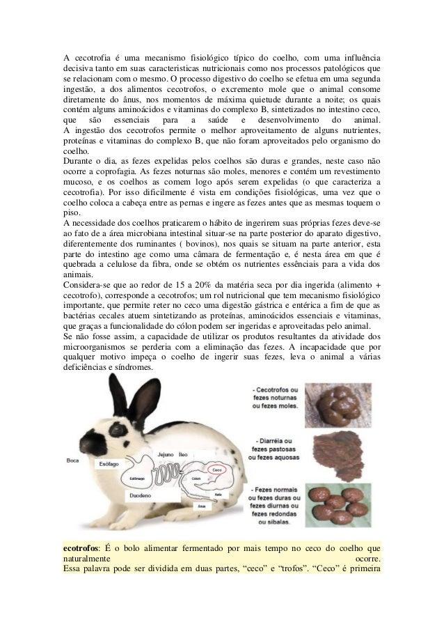 A cecotrofia é uma mecanismo fisiológico típico do coelho, com uma influênciadecisiva tanto em suas caracteristicas nutric...