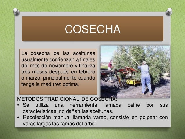 Aceite de-oliva-5 Slide 3