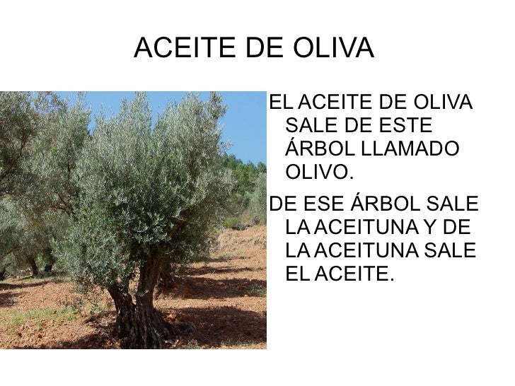 ACEITE DE OLIVA  <ul><li>EL ACEITE DE OLIVA  SALE DE ESTE ÁRBOL LLAMADO OLIVO.